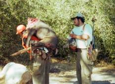 38.Tori's Santiago Canyon Buck