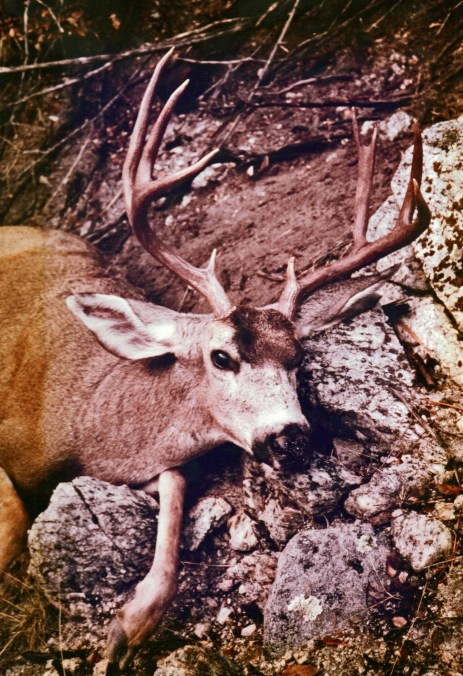 Monster buck at Mill Creek, rifle