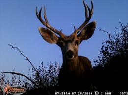89.Trail Cam Buck