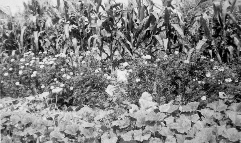 059 Mom's Garden