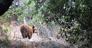 Monrovia Falls bear 2013 (2)